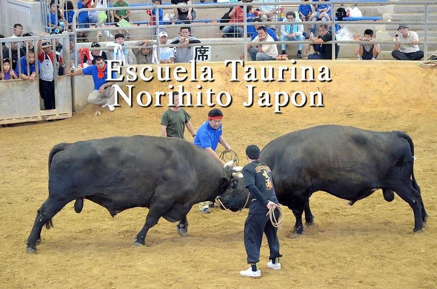 Club Taurino Norihito Japon