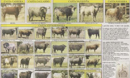 El Origen del toro de lidia (2)